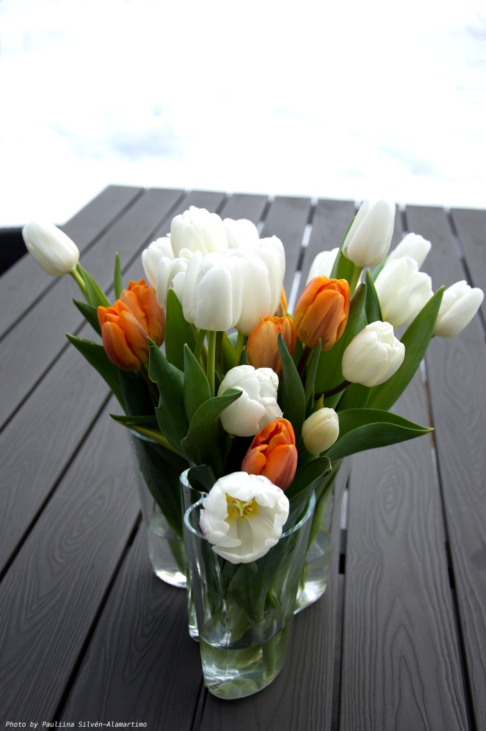 Tulips kopio